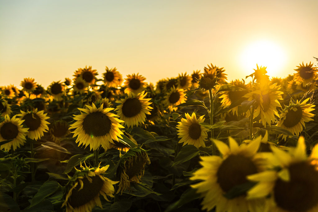 Does Vitamin D the 'sunshine nutrient' lower Covid-19 risk?